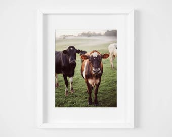 Farm art - Cow photography print - Country wall decor - Rich earth tones - French country art - Black and white - Farm animals - Nursery art