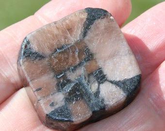 Andalusite chiastolite on stone