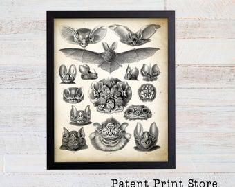 Ernst Haeckel Bats Print. Vampire Bats Poster. Art Nouveau Ernst Haeckel Print. Science Print. Science Gift. Bat Illustration. Educational