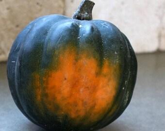 Ebony Acorn Squash 10+ seeds, Reliable heirloom sweet squash