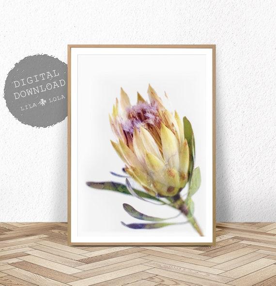 Protea Print, Australian Native Flower Wall Art, Watercolour, Printable Poster, Digital Download, Photography, Yellow Flower Decor