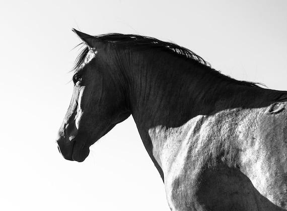 Black Horse, Black Beauty, Horse Print, Equine Prints, Black and White Print, Animal Print, Black Stallion,