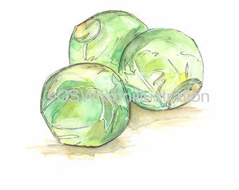 Brussel Sprouts - Postcard - 4x6