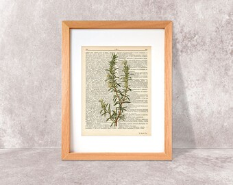 Rosemary herb dictionary print-Kitchen wall art-Rosemary on book page-Rosemary herb spices print-Botanical Herb Print-by NATURA PICTA-DP038