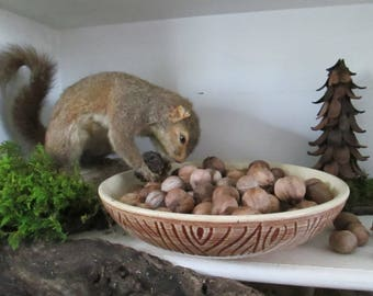 Hickory Nuts Whole, Rustic Vase Fillers, Craft/Decorating Material