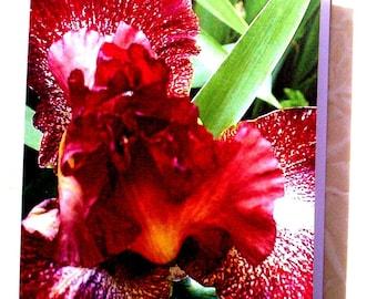 Orange Iris  greeting card Blank inside
