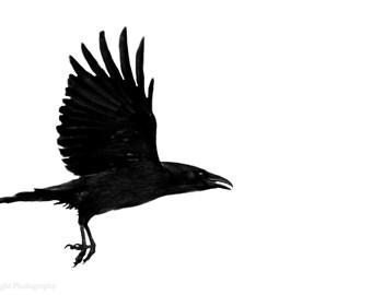 THE CROW - Giclee crow print, crow photo, bird photography, fine art print, wall decor, free uk p&p