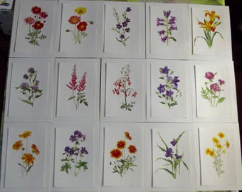 15 old posters school botanical short-lived Virginia, Lily, Iceland, Lily, Harebell poppy large leaf to leaf fish
