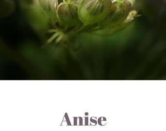 Anise essential oil QRDS