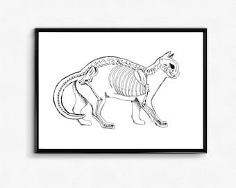 Rabbit Art Print Anatomy Bunny Poster Rabbit Skeleton