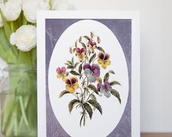 "Vintage illustration of Pansies - fine art print, flower art, home decor 8""x12"" 103"