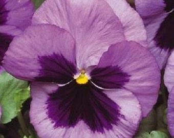35+ Ocean Matrix Pansy / Flower Seeds