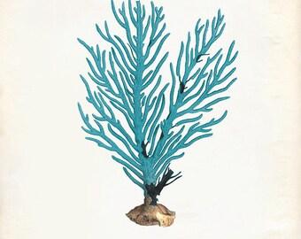 Vintage Teal Sea Coral on Antique Ephemera Print 8x10 P273