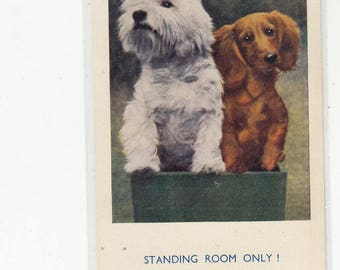 Standing Room Only/West Highland Terrier /Standing Dog On Box With Sweet Little Dachshund Dog,1958