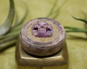 Miniature Succulent - Gilded Flower