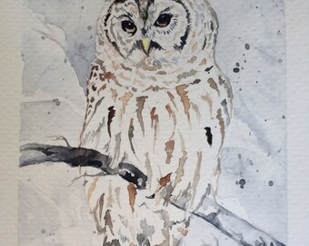 Barred Owl in Winter Original Hand painted watercolor gift card art