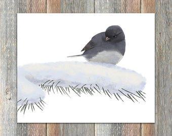 Dark-eyed Junco Bird Print
