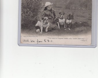 Young British Lady Sits With Four Bulldogs Antique Postcard For Photo Image