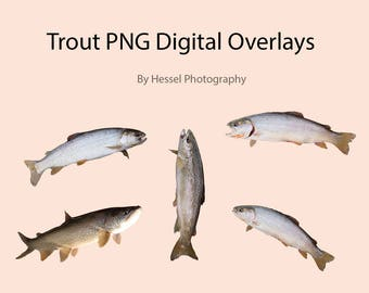 Fish PNG digital Overlay, photoshop overlays, trout stock, digital fish, png, overlays, photo overlay, photoshop, fish, trout, photoshop