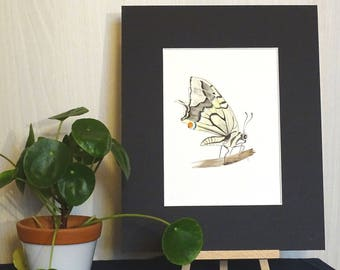 Multicolored Butterfly - original watercolor painting-decorative element