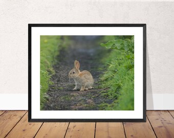Rabbit Photographic Print / Animal Photograph / Wildlife Photography Image / Wall Art (various sizes and customisation available)