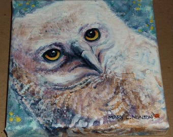 PRIMO Great Horned nestling 2017 Season 5 ~ Original, hand-painted, One-of-a-kind!  5x5 inches  FREE shipping USA