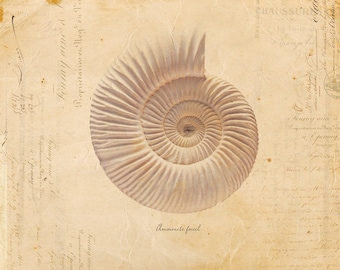 Vintage Fossil Shell auf französischen Ephemera Print 8 x 10 P66