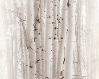 Aspen tree photo, white tree photo, aspen tree decor, Colorado art, rustic wall decor, log cabin art, sepia art photo | A Gathering