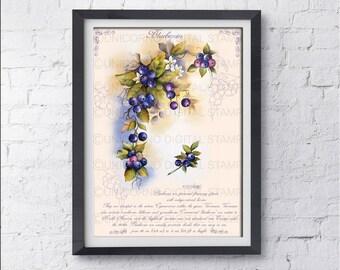 Stampe per cucina, Quadri cucina, Stampe con frutta, Pianta di mirtillo, Stampe Botaniche, Stampe Murali, Poster frutta, Stampe digitali