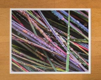 Photo Print of Rainbow Colored Grass Speckled with Dew Drops from DebSladekPhotography