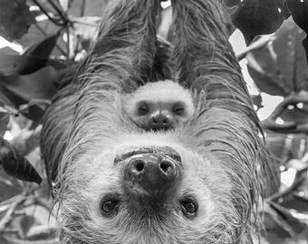 Animal Nursery Art, MOM and BABY SLOTH, Baby Animal Photography, Black and White Photography, Safari Nursery Decor, Safari Baby Shower, Zoo