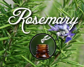 Pure Rosemary Essential Oil for Diffuser, 10ml Euro Dropper Bottle