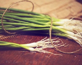 Food Photography - Kitchen Art - Green Onions Photograph - Dining Room Decor - Fine Art Photography Print - Green Brown Kitchen Decor
