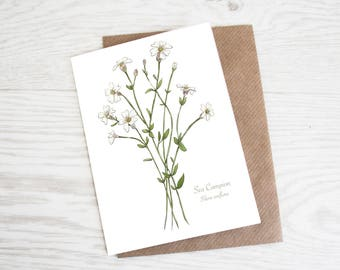 Sea Campion, A6 Botanical Wildflower Greeting Card