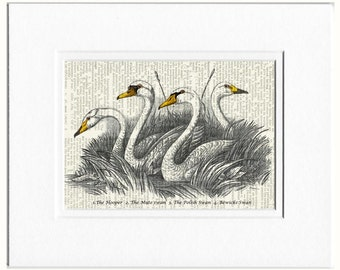 swans dictionary page print