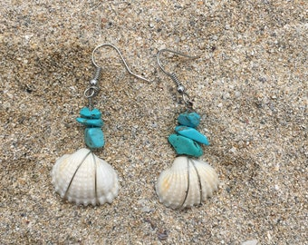 Clamrose shell earrings with turquoise beads.