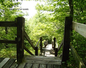 Stairway through the woods