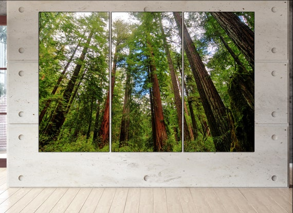Redwoods State Park  canvas Redwoods State Park wall decoration Redwoods State Park canvas art large canvas  wall decor