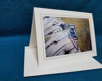 Set of 10 original art blank note cards with matching envelopes. Woodpecker on a birch tree by me.