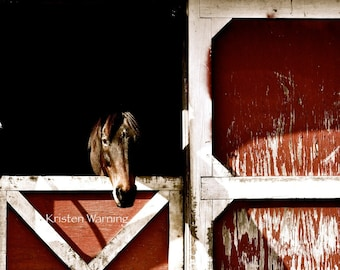 Horse Photo, Thoroughbred, Barns, Equine Art, Horses, Horse Pictures, Pictures of Horses, Red