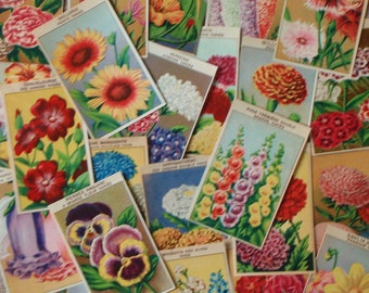 Vintage botanical prints 24 Flower Seed Packet Labels from France dating to the 1920s these make great floral wall art (Set 2)