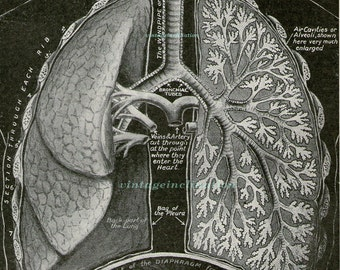 Antique Medical Print, Every Breath You Breathe, The Lungs Shown as they are and also in section, 1920 anatomy anatomical art