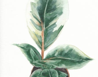Original 8 x 10 inch watercolor painting of a potted variegated plant by Meredith O'Neal