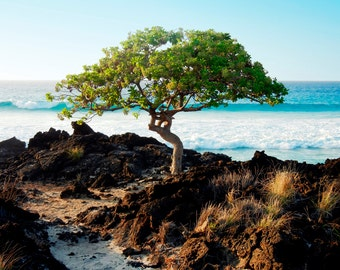 Fine Art Photography Canvas Giclee - Nature Photography - Tree By The Sea Kona Hawaii - Landscape Photography Big Island Hawaii Art