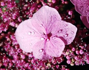 Rain On Pink Flower Fine Art Print