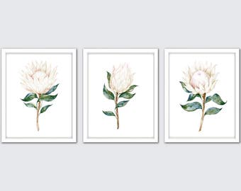 White Botanical Print Set of 3, Watercolor White Flower Prints, Botanical Print Set of 3, Protea Art Prints, Magnolia Wall Decor
