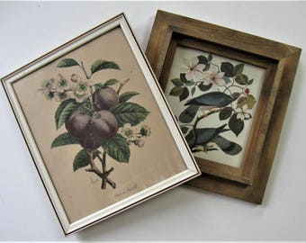 Pair of vintage Shabby botanical prints, rustic shadowbox wood frame, bird print, Shirat prune print, distressed white frame, gift idea