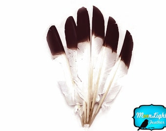 Eagle Feathers, 1/4 lb - BROWN Tipped Turkey Pointers 'Imitation Eagle' Wing Wholesale Feathers (bulk) : 3814