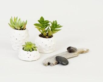 Handgefertigte Keramik kleine Keramik Pflanzer kleine Pflanze Topf Mini Pflanzer ~ weisser Keramik Schalen Urchin Pflanzer Töpfe für Pflanzen ~ Brighton UK