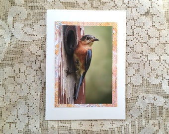 Bluebird note card, 2